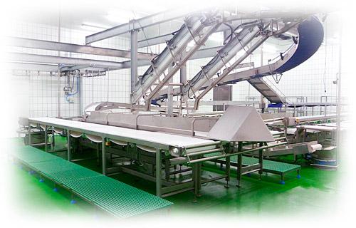 Matadero - proceso de fabricación Jamones